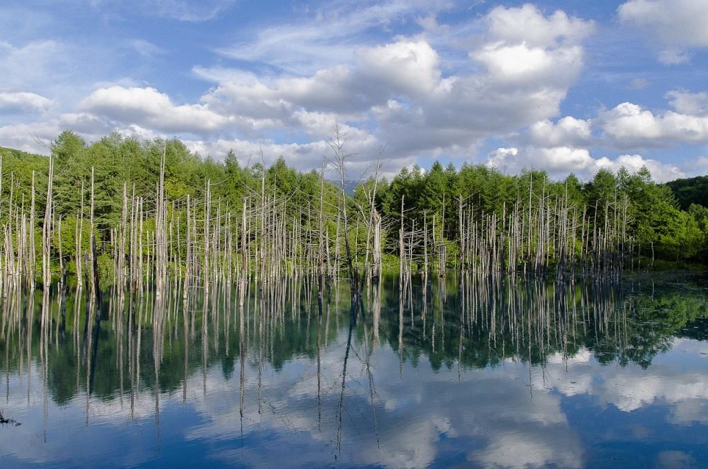 ワイズルーム 美瑛 青い池