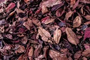 ワイズルーム 枯葉
