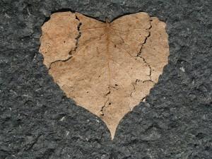 ワイズルーム ハート 枯れ葉