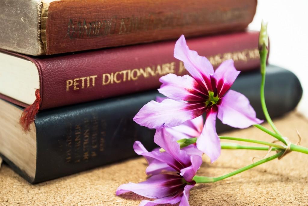 Y's Room dictionary ワイズルーム 辞書