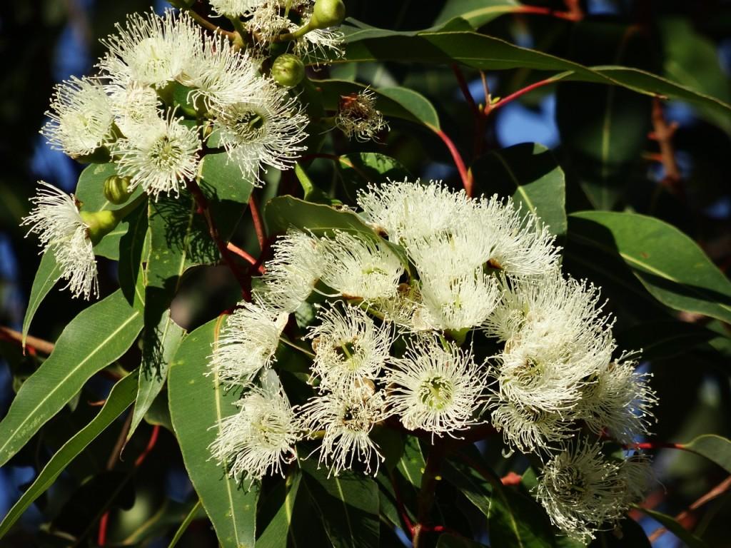 ユーカリ Eucalyptus ワイズルーム Y's Room